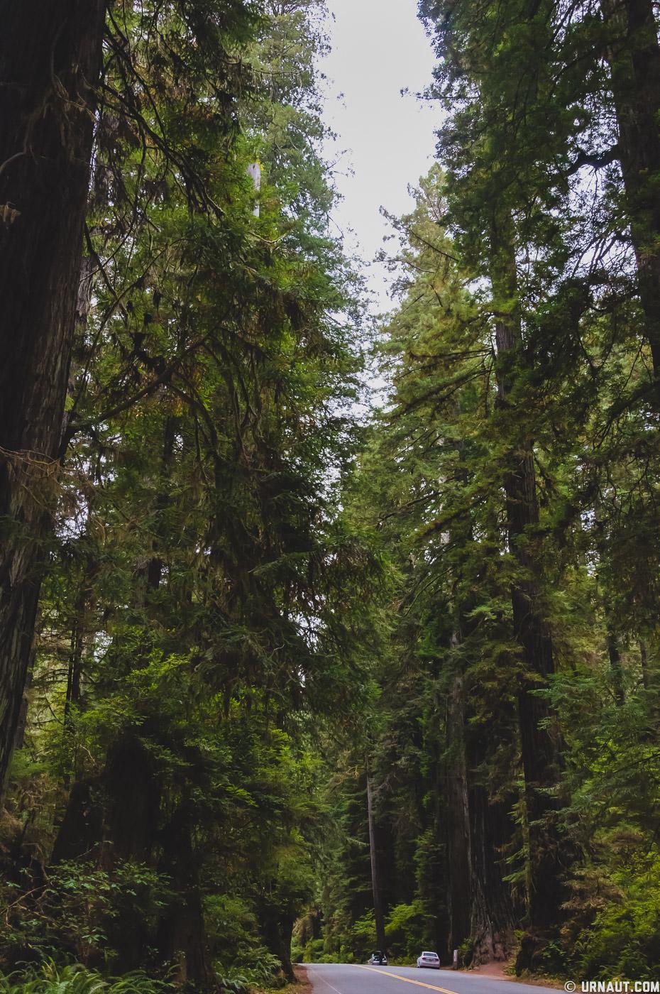 0152-Redwoods.jpg